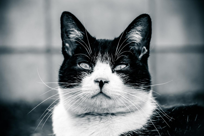 cat-ago